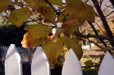 中秋节  秋叶子图片