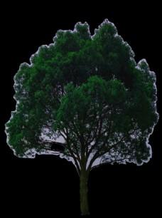 免扣素材大树图片