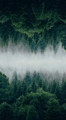 森林微信地產背景圖片