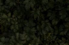 黑色树叶背景图片
