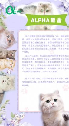 简约大气宠物猫舍海报图片