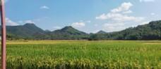 天空山稻田图片