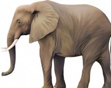 大象矢量素材图片
