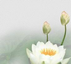 荷花元素图片