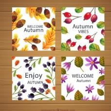 秋季花草卡片图片