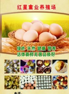 禽业宣传单活珠子图片