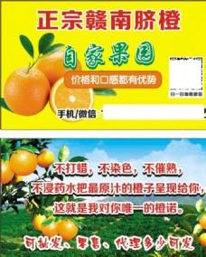 赣南脐橙名片自家果园图片
