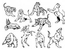 矢量老虎豹子图片
