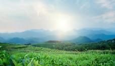 蓝天白云大草坪图片