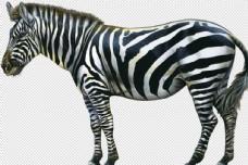 斑马马透明底动物免抠图图片
