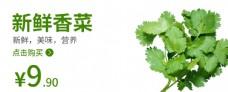 香菜食品海报香菜海报图片