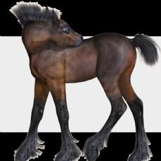 马透明底动物免抠图图片