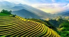 高山梯田稻谷天空光线桌面壁纸图片