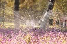 花圃灌溉图片