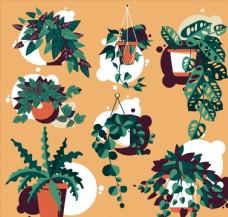 绿色植物盆栽图片