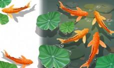 锦鲤矢量素材图片