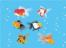 矢量金鱼图片