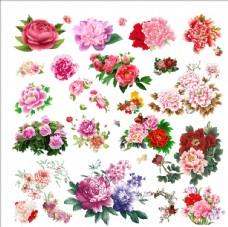 牡丹国画牡丹牡丹花素材图片
