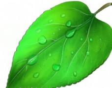 一片绿叶插画图案图片
