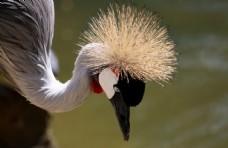漂亮的丹顶鹤图片