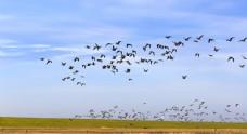草原上的飞鸟图片