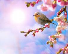 花朵枝头上的小鸟图片