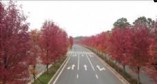 航拍红枫公路