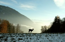 冬季自然景观图片
