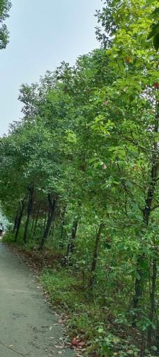 风景桌面壁纸摄影自然景观图片