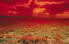 红色花海图片