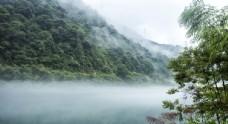 森林樹林戶外旅游背景海報素材圖片