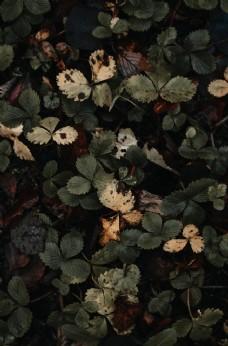 绿色落叶秋天背景图片