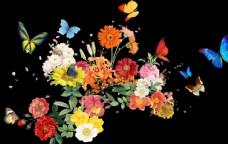 花海蝴蝶花朵图片