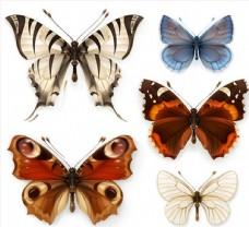 蝴蝶標本矢量圖片