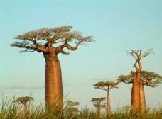 森林树木自然景观背景素材图片