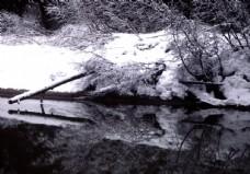 林海雪原中的溪流圖片