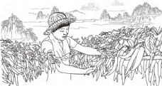 原生态辣椒图片