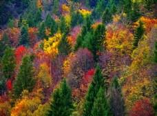 五花山林风景图片