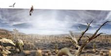 沙漠秋天自然景观图片