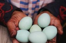 绿壳鸡蛋图片