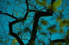 枝条与天空图片