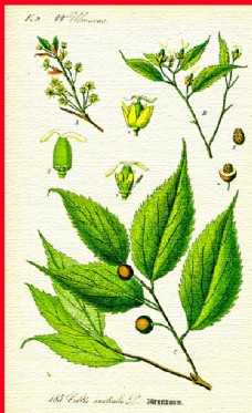 绿叶叶子叶脉图片