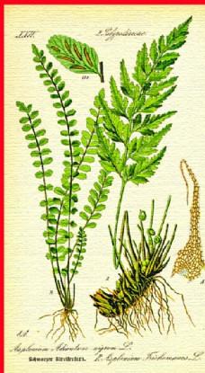 植物根茎叶图片