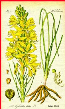 植物叶子绿叶图片