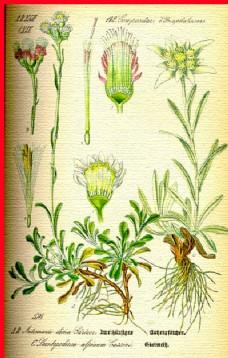 根茎叶图片