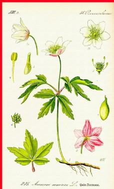 花瓣花朵图片