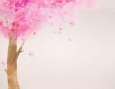粉色花卉图片