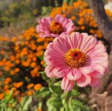 鲜花自然风景图片
