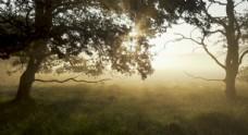 阳光穿过森林草地