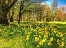 春季自然景观图片